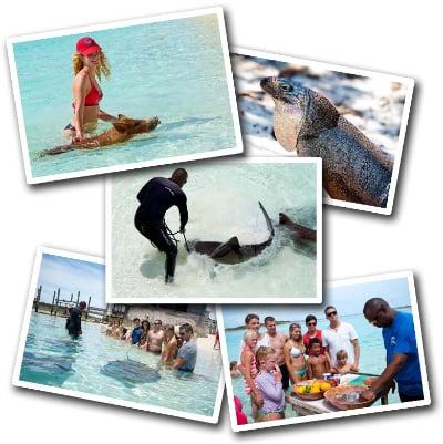 Powerboat Adventures - Exuma Bahamas Tour - Swimming pigs