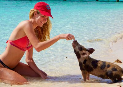 swimming-pigs-bahamas-crop